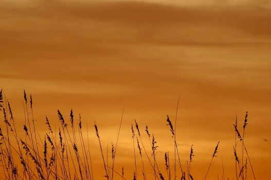 Orange sky and sea oats
