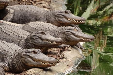 Smile! Come visit us at the Alligator Farm