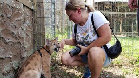 petting baby cougar at Single Vision